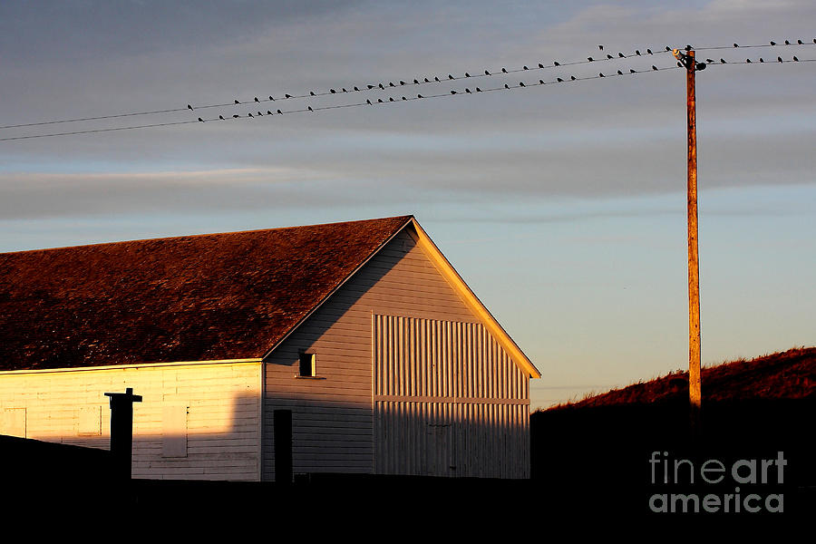 Pierce Point Ranch Photograph - Birds On A Wire by Wingsdomain Art and Photography