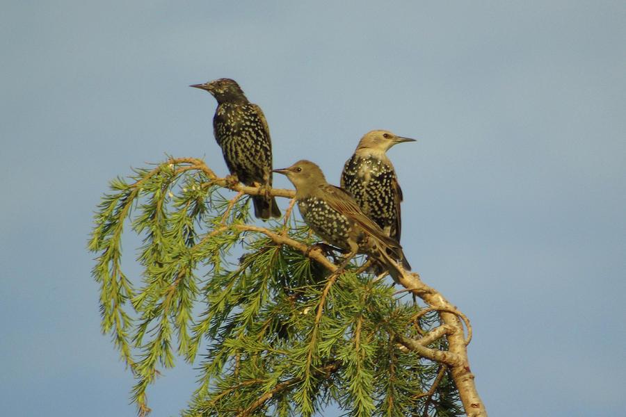 Three Photograph - Birds-on-watch by Gordon Auld