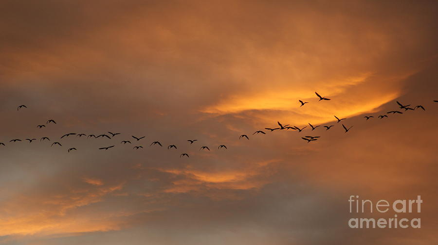 Sunsets Photograph - Birds Over San Miguel De Allende by John  Kolenberg
