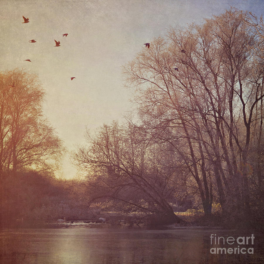 Trees Photograph - Birds Take Flight Over Lake On A Winters Morning by Lyn Randle