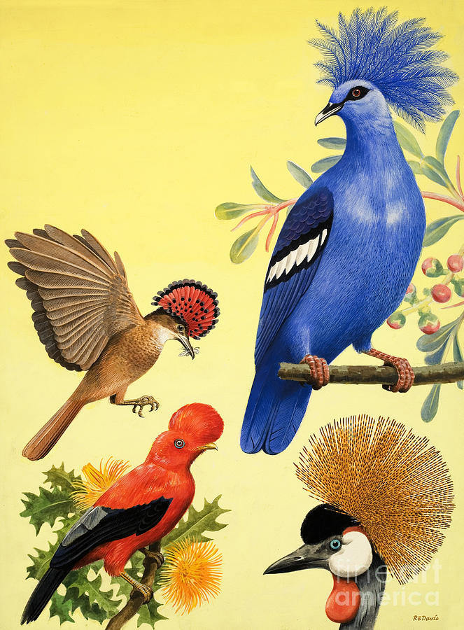Birds Painting - Birds With Crowns by RB Davis
