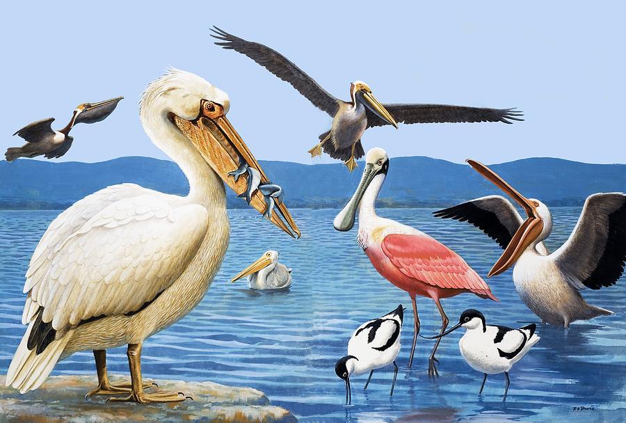 Birds; Beaks; White Pelican; Brown Pelican; Roseate Spoonbill; Avocet; Fish; Water; Lake; America Painting - Birds With Strange Beaks by R B Davis