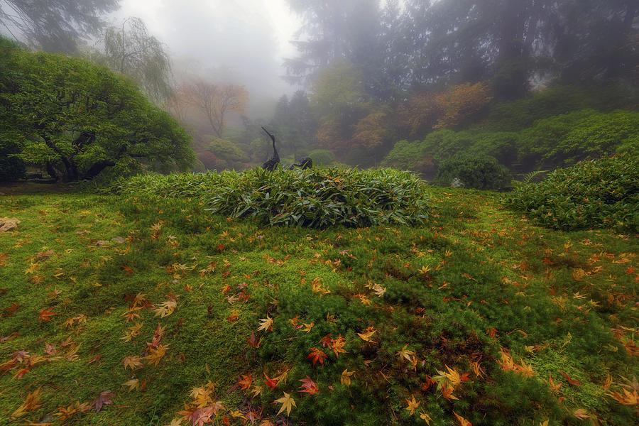 Portland Photograph - Birdwatching by David Gn