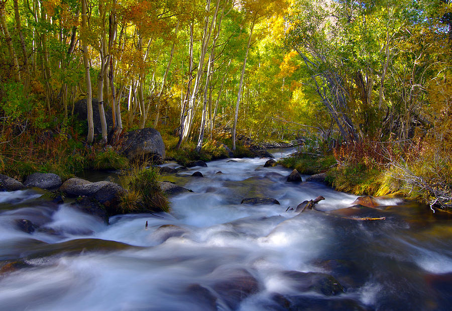 Bishop Creek in Fall Eastern Sierra Photograph by Frank Lee Hawkins Eastern Sierra Gallery