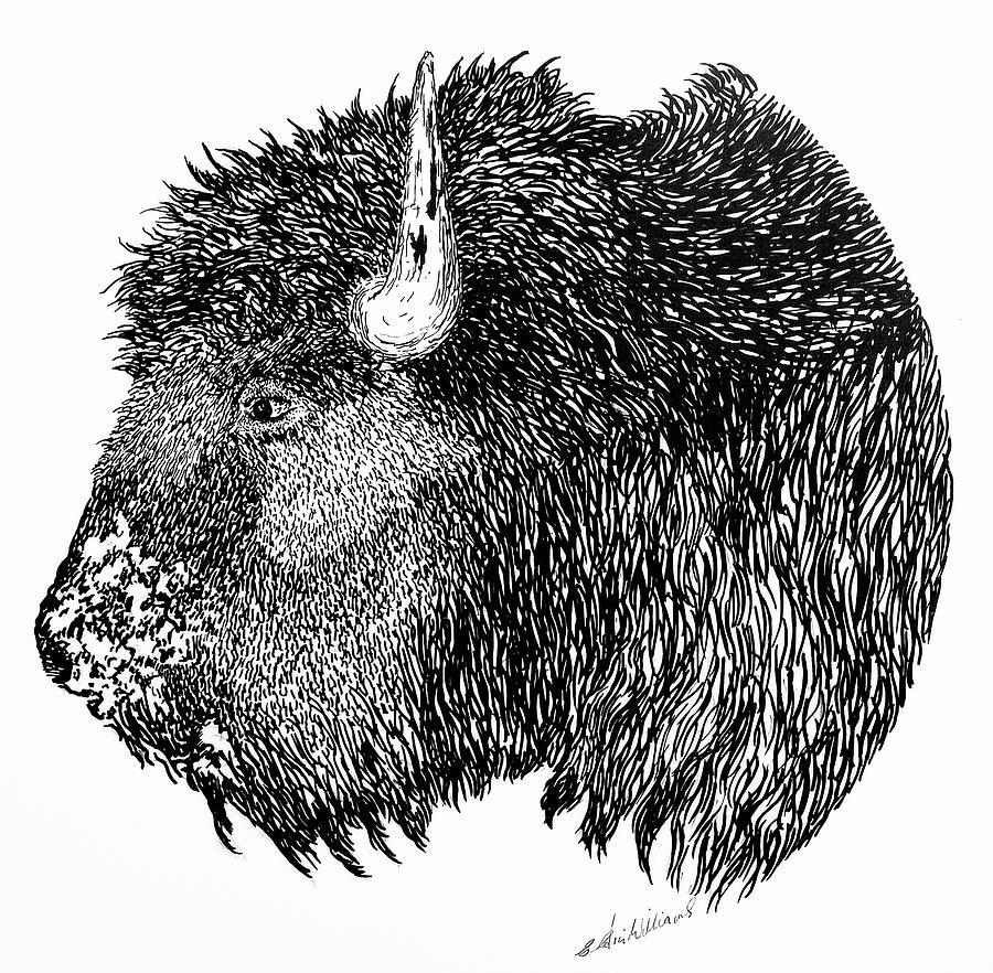 Bison by E Colin Williams ARCA