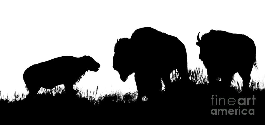 Bison Family Silhouette Photograph By Priscilla Burgers