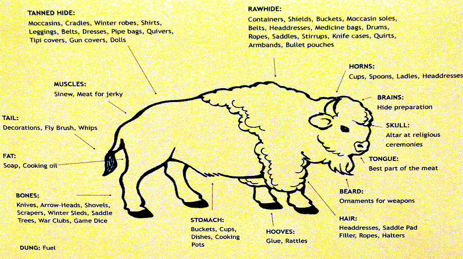 Bison Parts Chart  Photograph By Oscar Williams