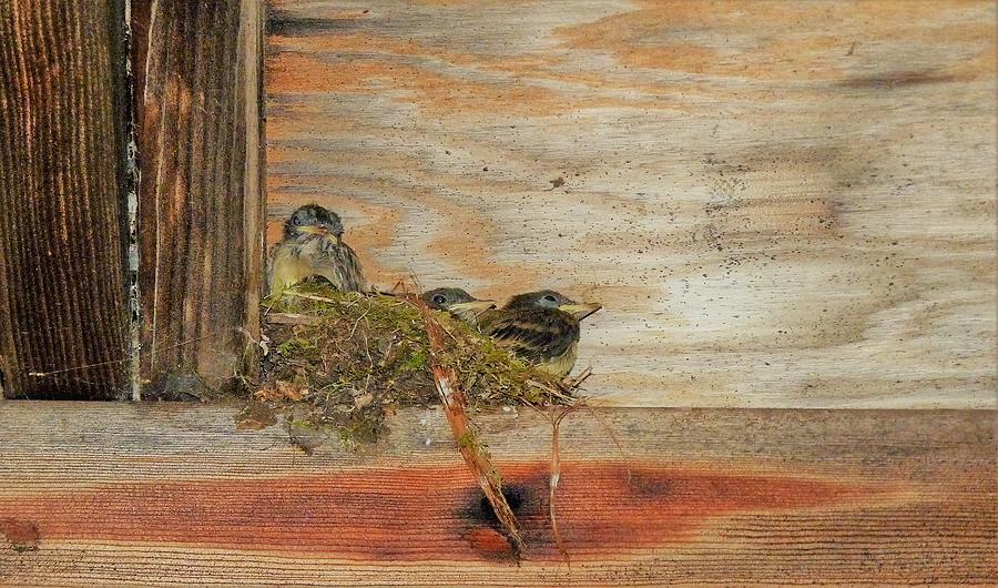 Birds Photograph - Bitty Birds by Donjoe Mitchell