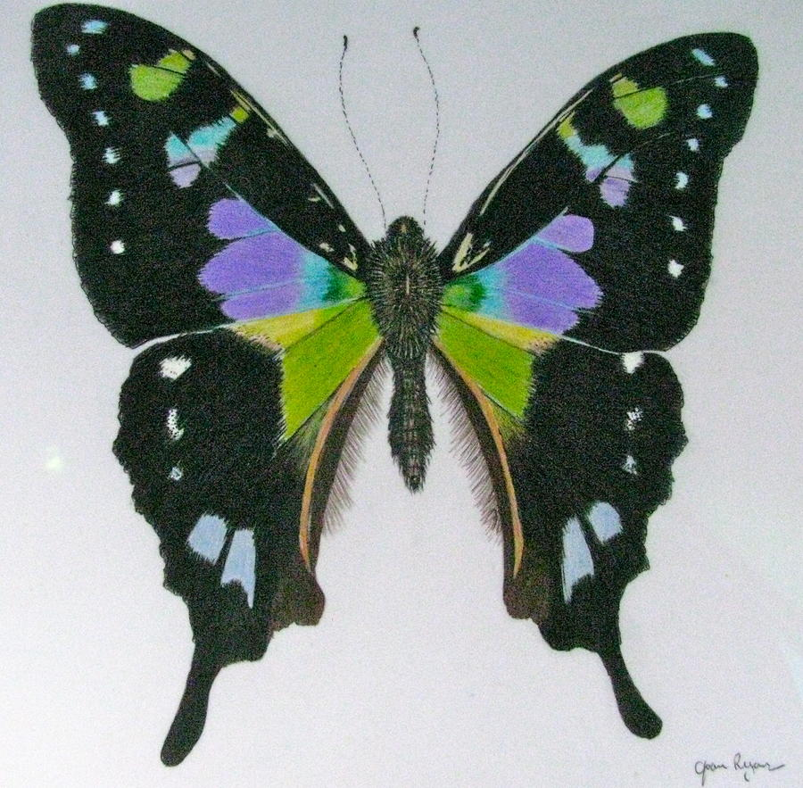 Black And Purple Butterfly Drawing By Joan Ryan