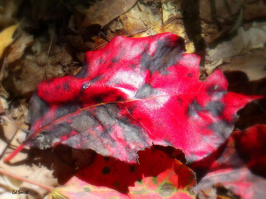Black And Red Photograph - Black And Red by Ed Smith