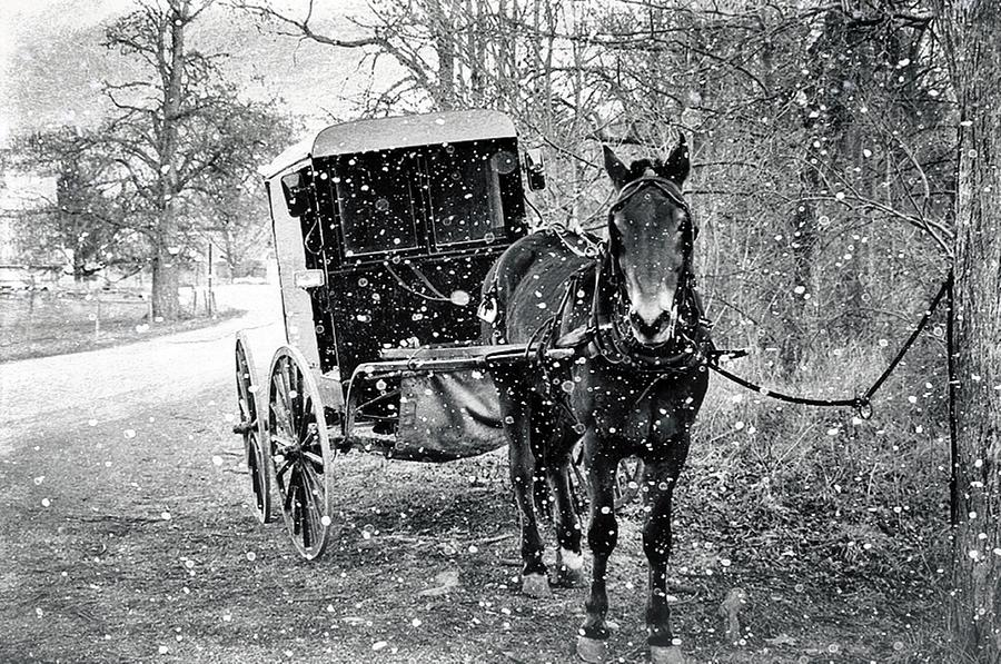Horse Photograph - Black And White Amish Buggy by Stephanie Calhoun