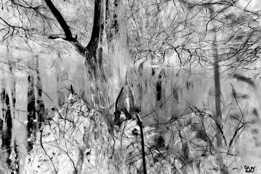 Black and White Bayou II by Gina O'Brien