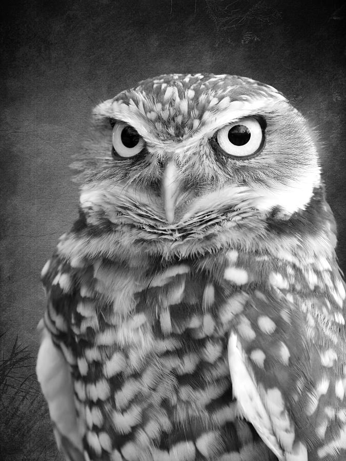Black And White Burrowing Owl Photograph by Steve McKinzie