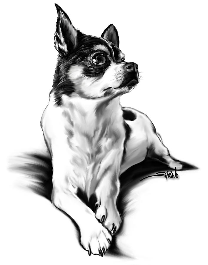 Black and White Chihuahua by Spano by Michael Spano