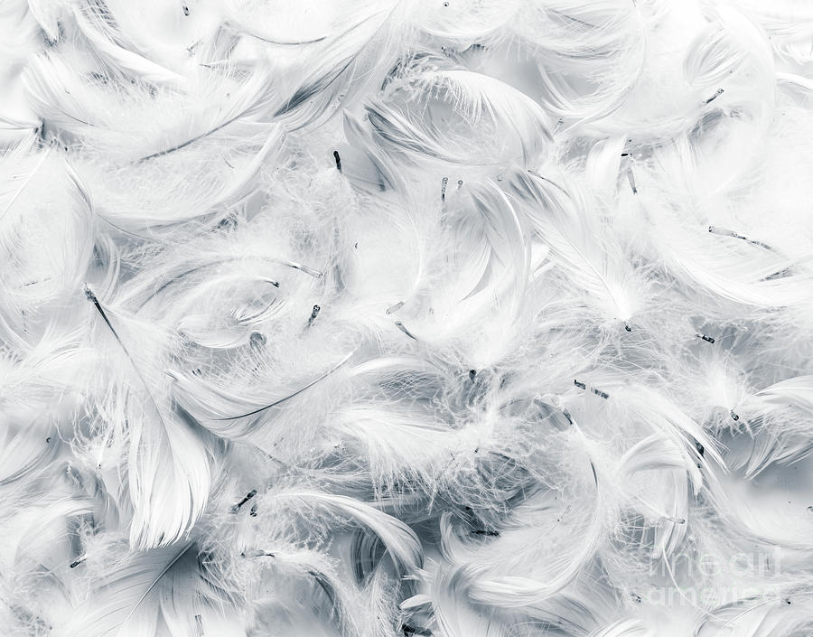 black and white feathers background photograph by michal