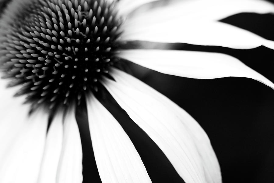 Horizontal photograph black and white flower maco by copyright johan klovsjö