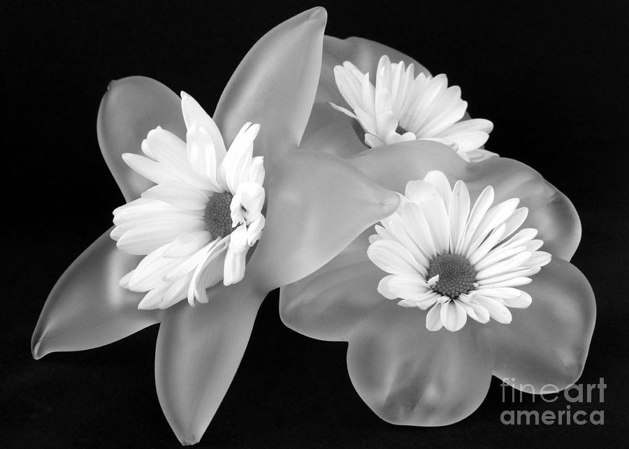 Black And White Flowers In Holders Photograph