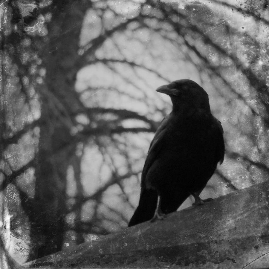 Black and white gothic crow by gothicrow images
