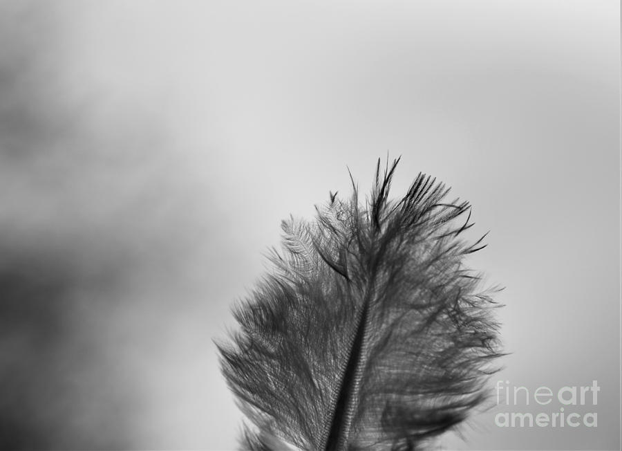 Black And White - Gray Scale - Down Feather Photograph