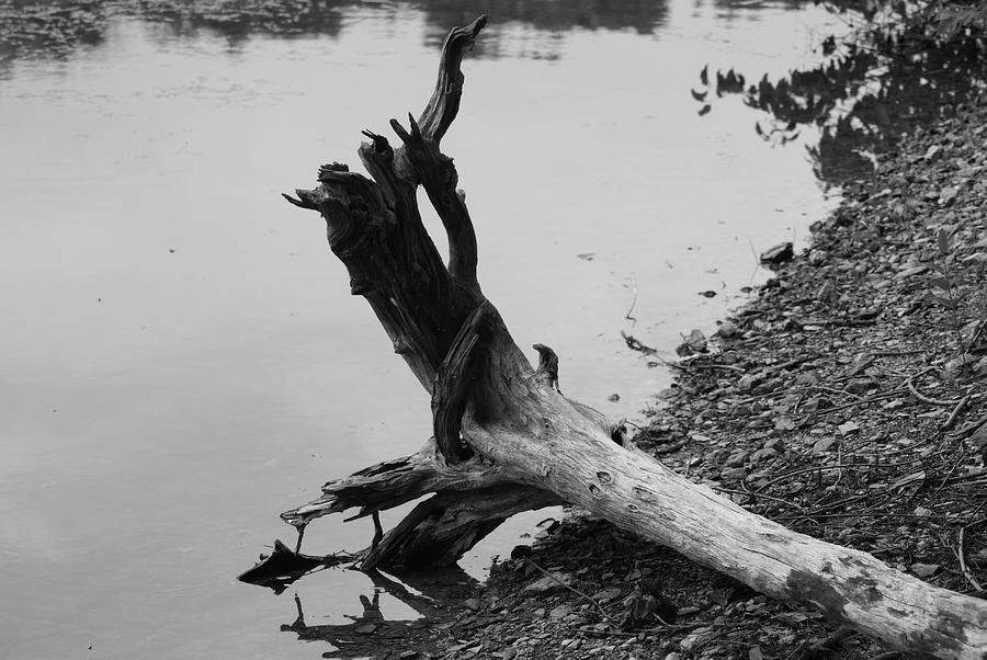 Scenic Photograph - Black And White by Heather Green