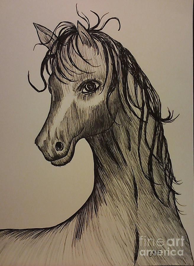 Horse Drawing - Black And White Horse by Ginny Youngblood