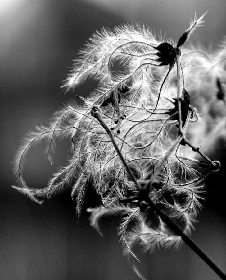 Black and white nature by Jolly Van der Velden