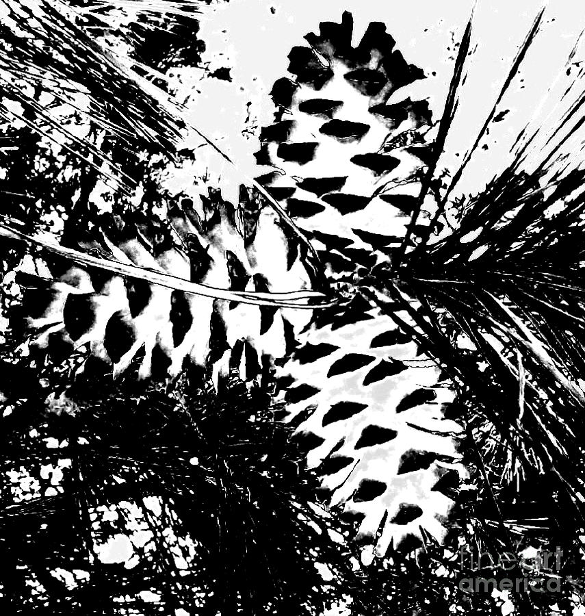 Black Photograph - Black And White Pine Cone by Cindy New