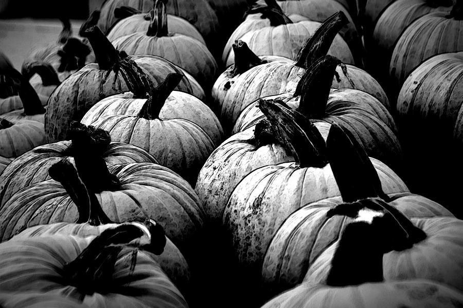 Pumpkins Photograph - Black And White Pumpkins by Bill Ardern