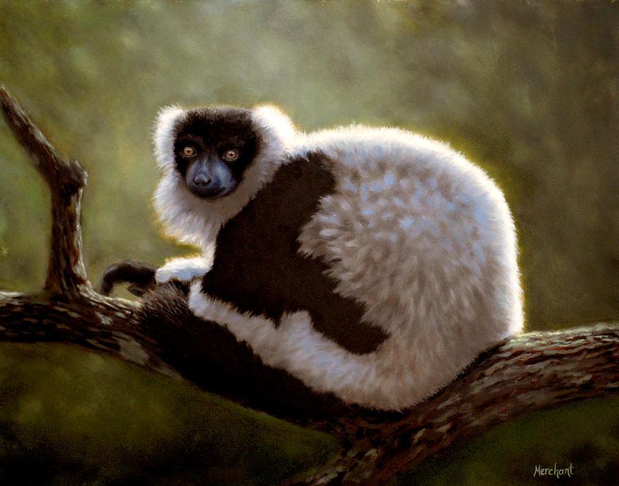 Lemur Painting - Black And White Ruffed Lemur by Linda Merchant
