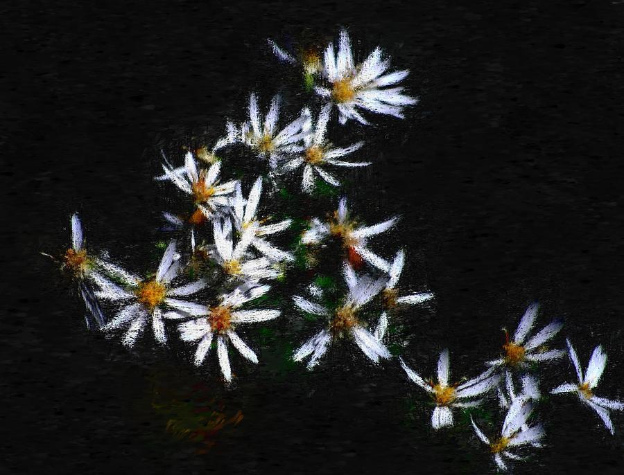 Digital Photograph Digital Art - Black And White Study II by David Lane