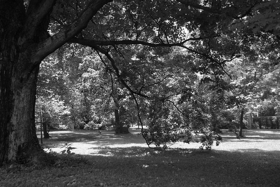 Black And White Photograph - Black And White Tree 1 by Steven Crown