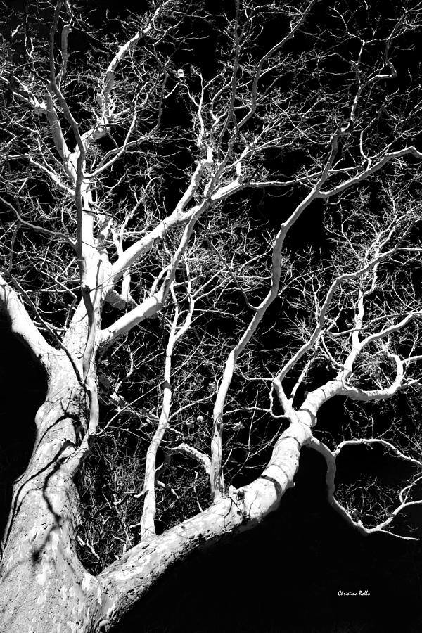 Black and white photograph black and white tree art iii by christina rollo