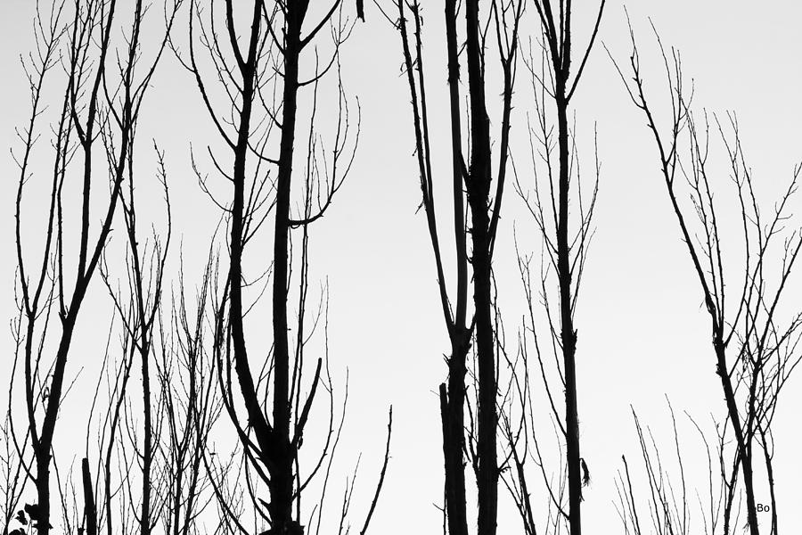Black photograph black and white tree branches abstract by james bo insogna