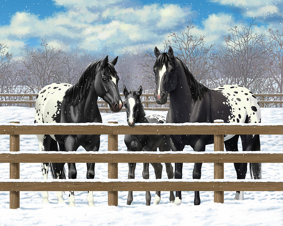 Horses Painting - Black Appaloosa Horses In Snow by Crista Forest