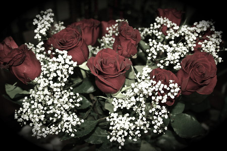 Roses Photograph - Black Baccara by Aimee Galicia Torres