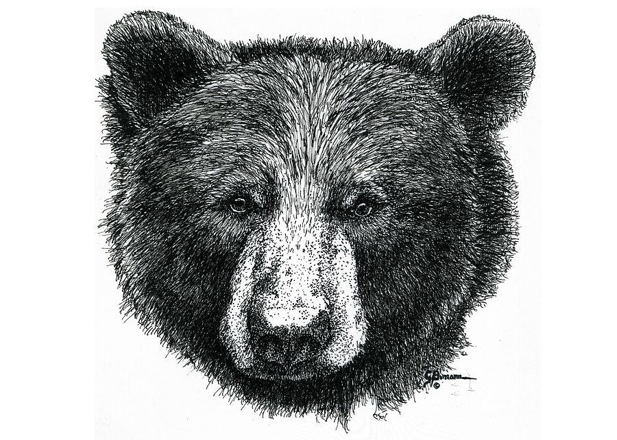 Black Bear Drawing by George Bumann