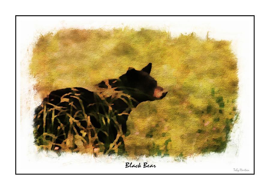 Black Bear Photograph by Toby Horton
