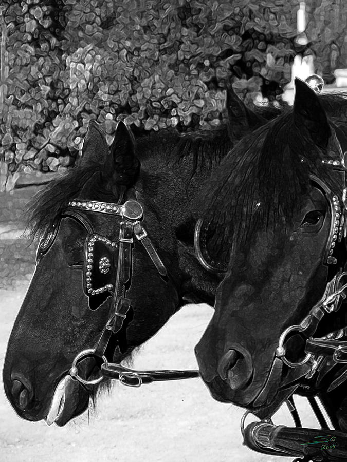 Horse Photograph - Black Beauties by Stuart Turnbull