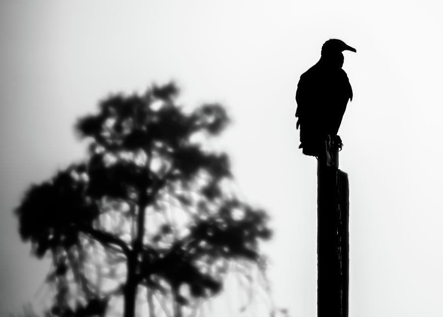 Birds Photograph - Black Bird by Keith Bowen