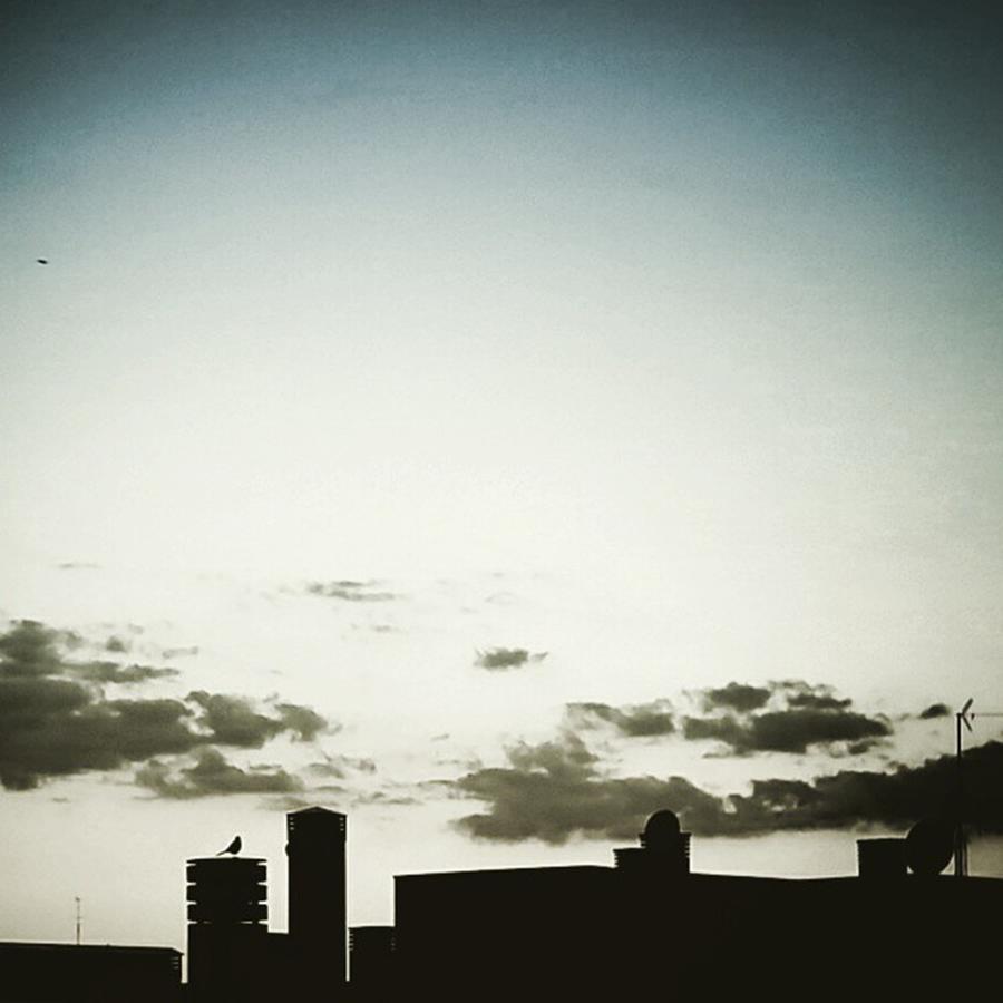 Madrid Photograph - Black Bird by Rafa Rivas