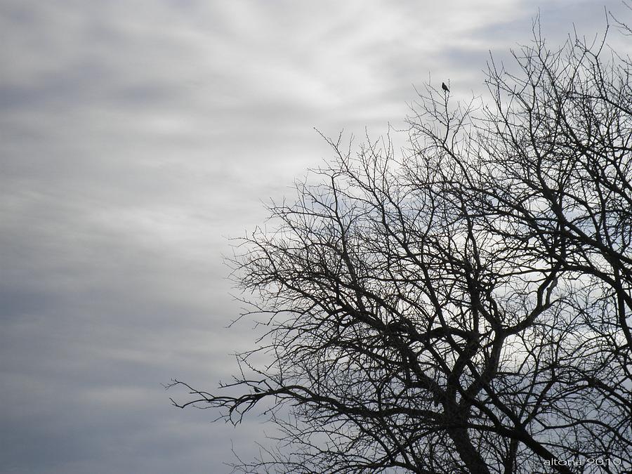 Blackbirds Photograph - Black Birds by T Cook