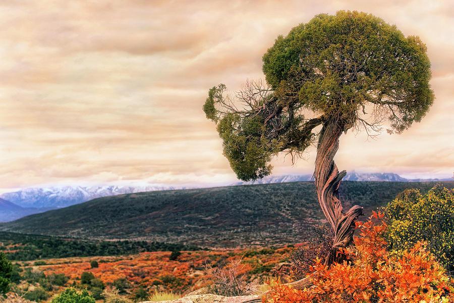 Colorado Photograph - Black Canyon Juniper - Colorado - Autumn by Jason Politte
