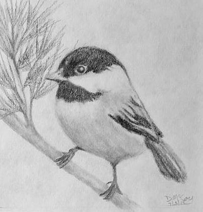 Black capped chickadee left facing Drawing by Danielle McCoy - photo#28