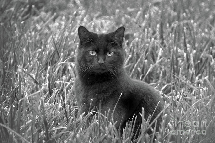 Black cat 2 Photograph by Candydash Images