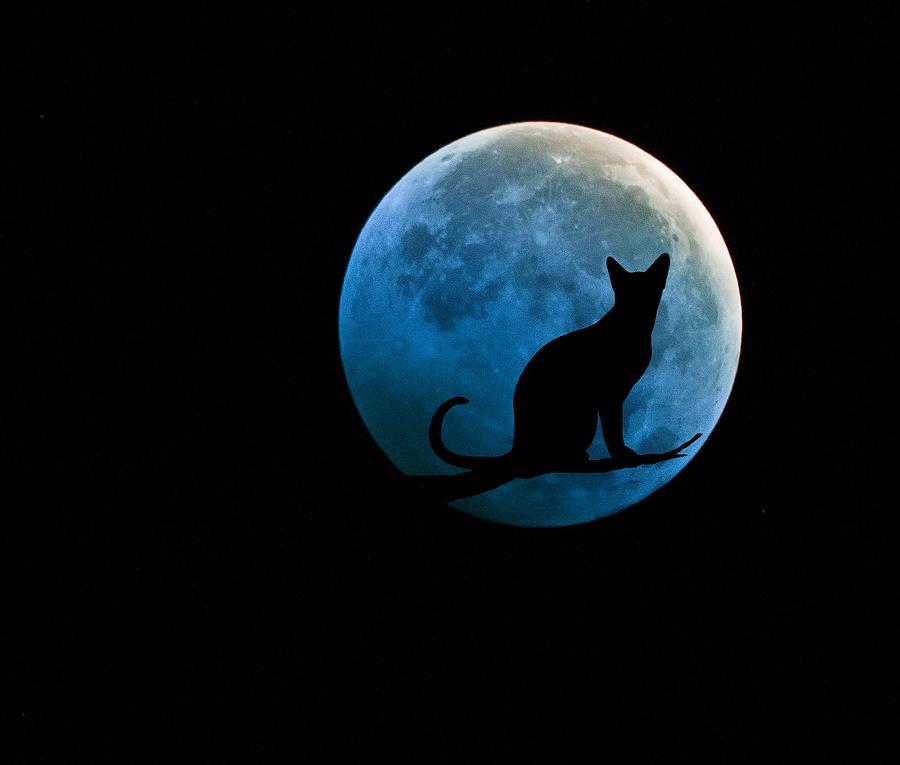 Картинка с луной и кошкой
