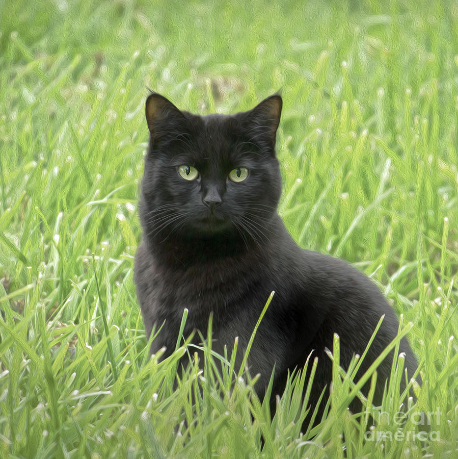 Black cat  Photograph by Candydash Images