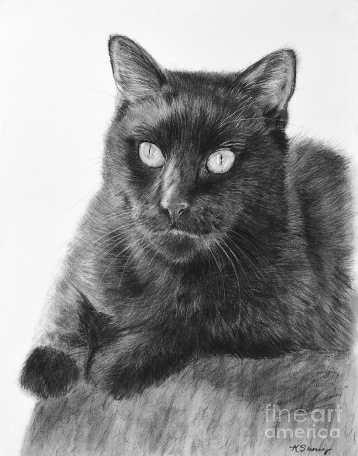 Black Cat Detailed Drawing by Kate Sumners