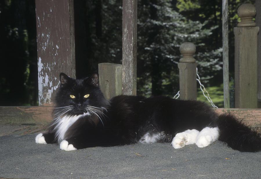 Black Cat Lying Down Photograph by Jerry Shulman