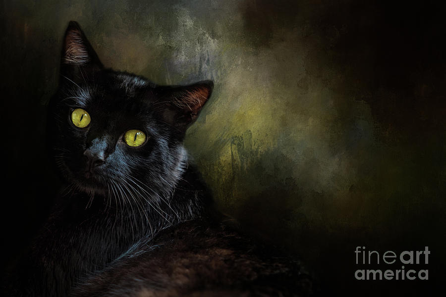 Black Cat Portrait Photograph