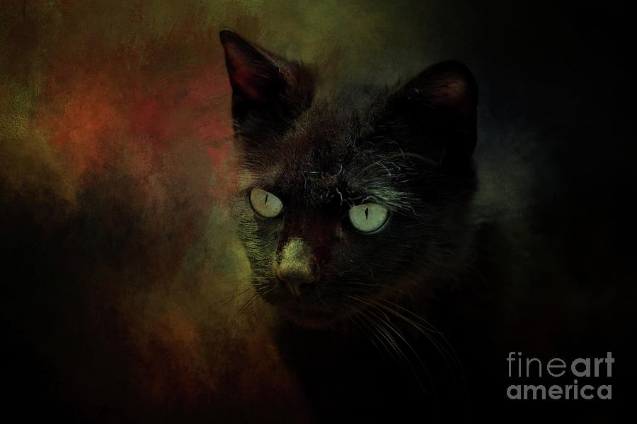 Cat Photograph - Black Cat Portrait by Eva Lechner